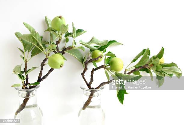 Close-Up Of Apple Twigs In Containers Against White Background