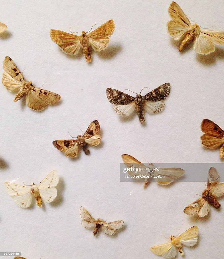 Close-Up Of Artificial Butterflies On White Wall