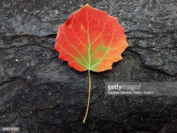 Close-Up Of Autumn Leaf On Rough Surface