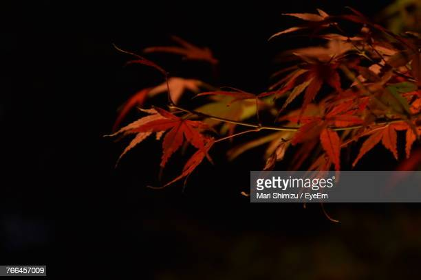 Close-Up Of Autumn Leaves At Night