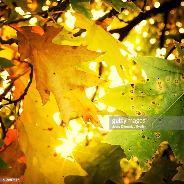 Close-Up Of Autumn Yellow Leaves