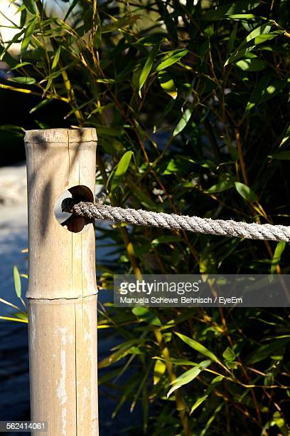 Close-Up Of Bamboo Post With Rope In Hole Against Plants