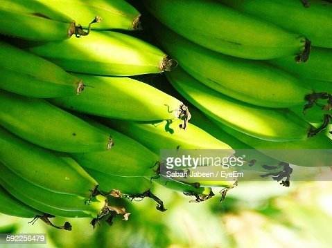 Close-Up Of Bananas Growing On Tree