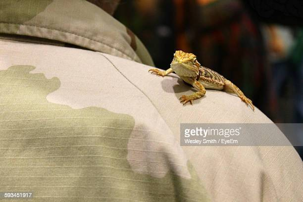 Close-Up Of Bearded Dragon On Fabric