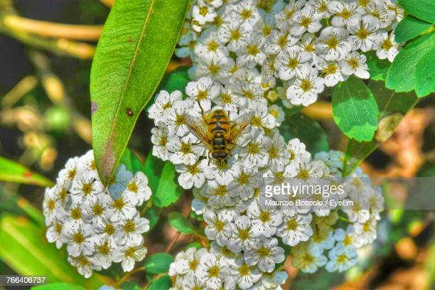 Close-Up Of Bee Pollinating In Flower