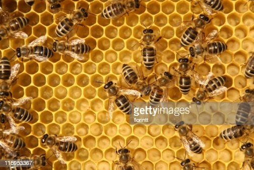 Close-up of bees working in a beehive