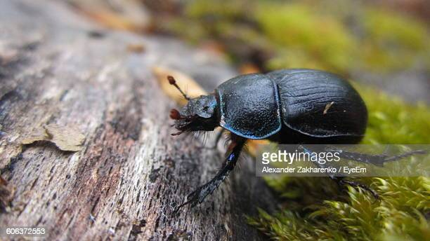 Close-Up Of Beetle On Tree