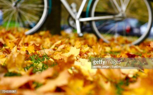 Close-Up Of Bicycle During Autumn