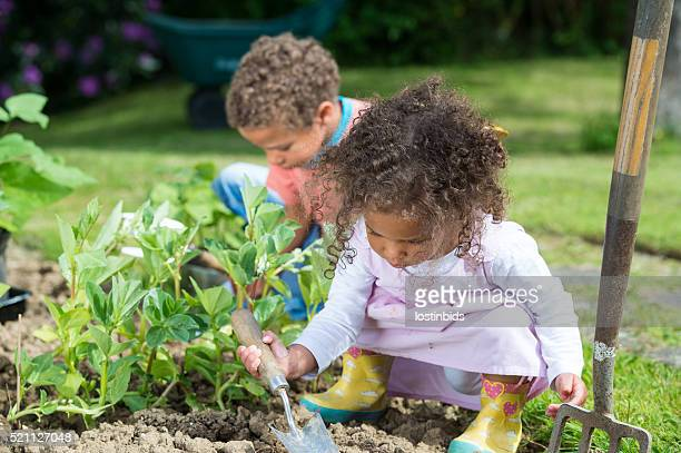 Close-up Of Biracial Little Girl And Boy Gardening