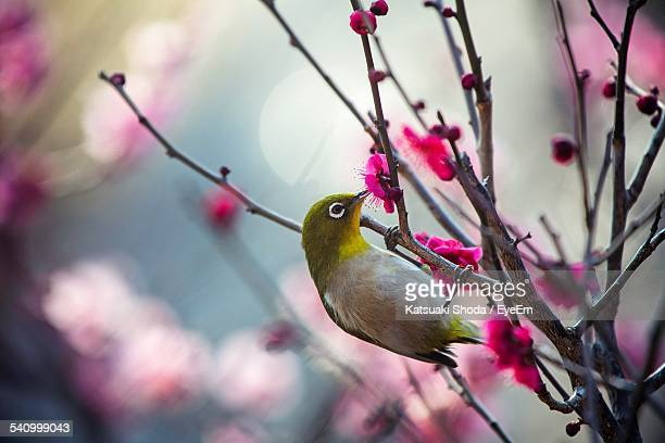 Close-Up Of Bird Perching On Flowering Tree