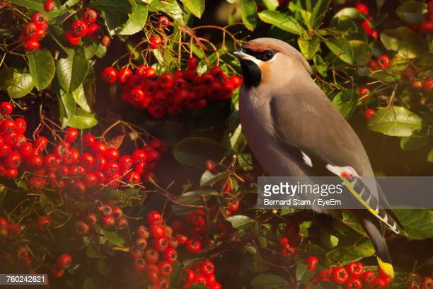 Close-Up Of Bird Perching On Red Flowers