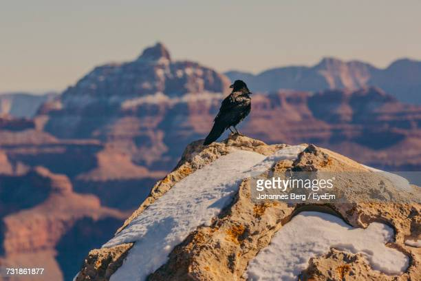 Close-Up Of Bird Perching On Rock Against Sky