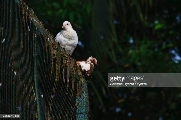 Close-Up Of Birds Perching On Fence