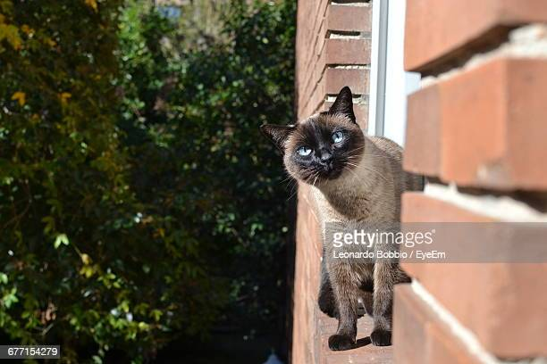 Close-Up Of Birman At Window Against Trees