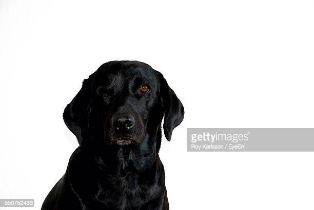 Close-Up Of Black Dog
