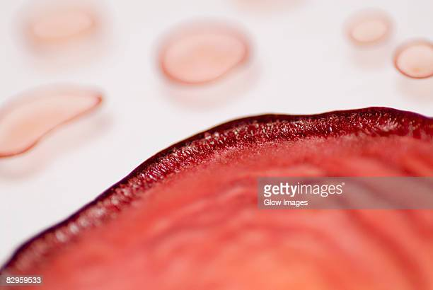 Close-up of blood cells