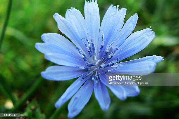 Close-Up Of Blue Flower Blooming Outdoors