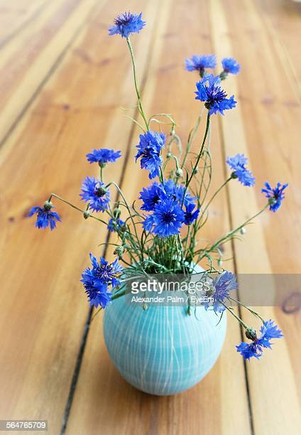 Close-Up Of Blue Flowers In Pot
