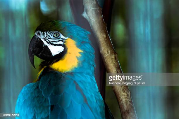 Close-Up Of Blue Macaw Perching On Wood