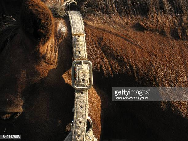 Close-Up Of Bridle On Horse