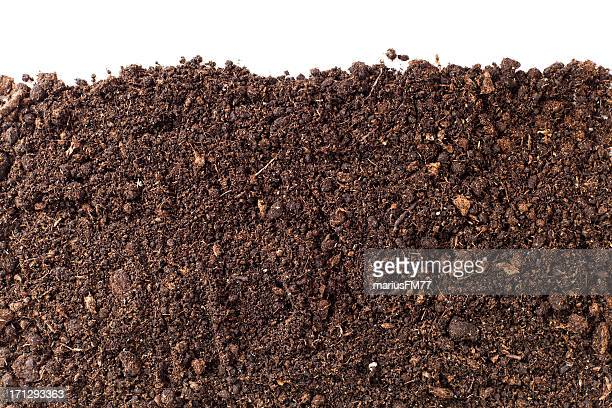 A close-up of brown dirt against a white background