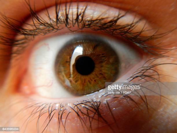 Close-up of brown eyes