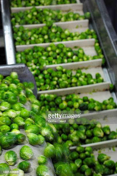 Close-up of Brussels Sprouts Being Processed