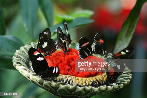 Close-Up Of Butterflies Pollinating On Flower