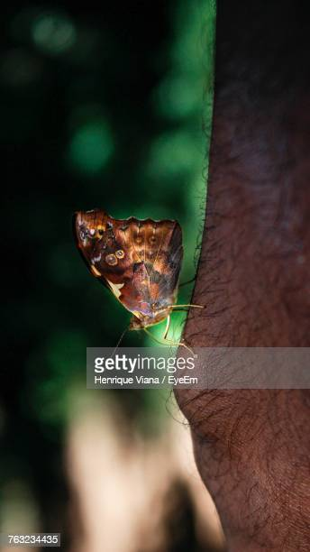 Close-Up Of Butterfly On Human Knee