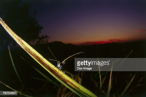 Close-up of Butterfly on leaf at sunset : Stock Photo