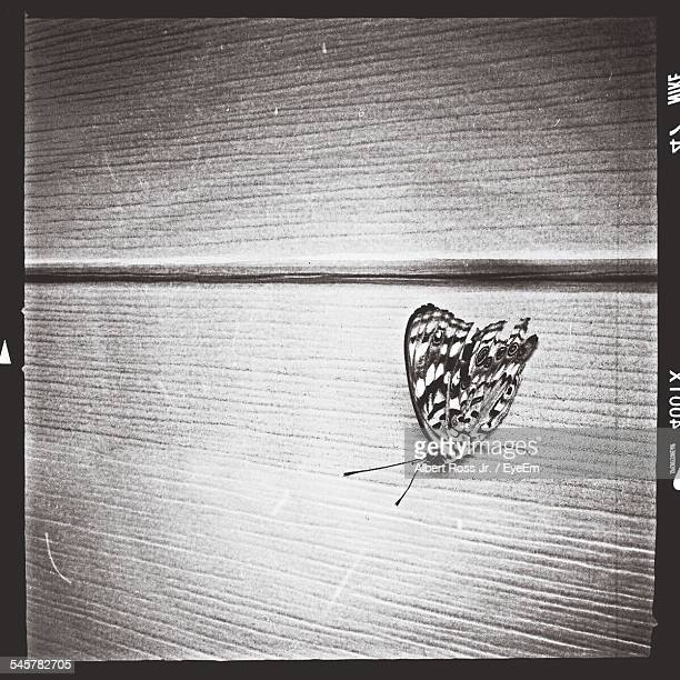 Close-Up Of Butterfly On Wooden Plank