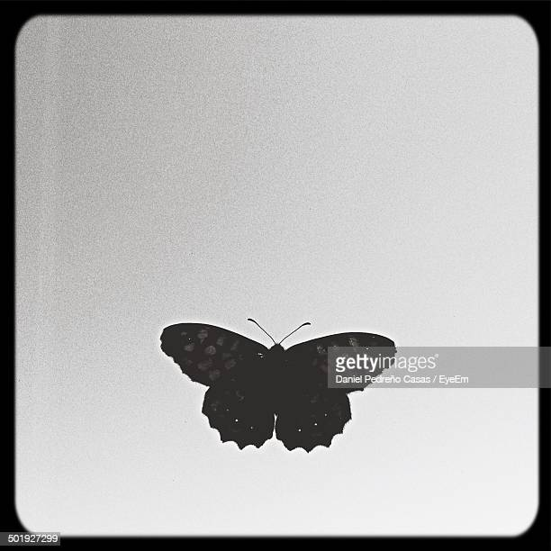 Close-up of butterfly over white background