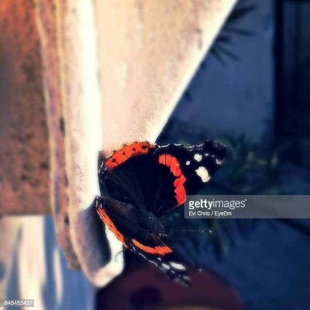 Close-Up Of Butterfly Perching On Retaining Wall
