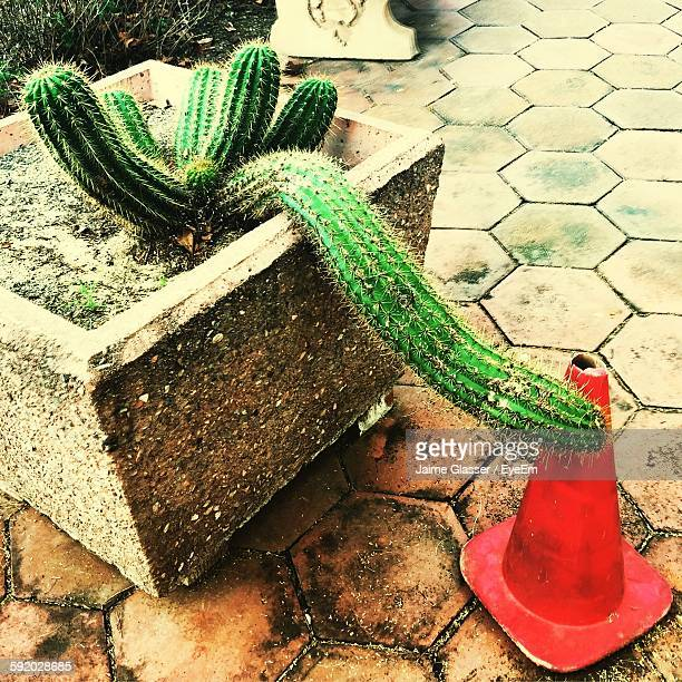 Close-Up Of Cactus Plant And Traffic Cone