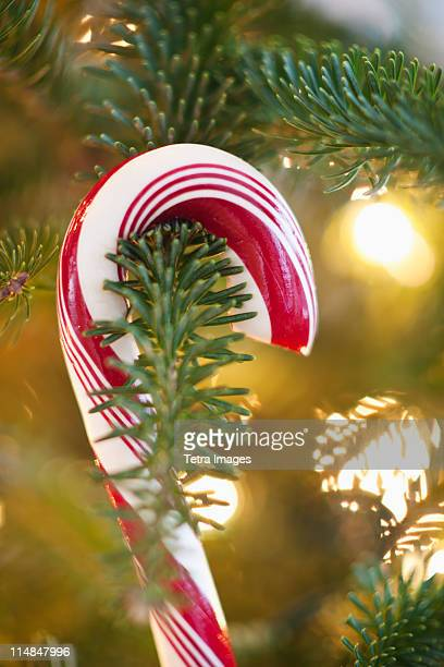 Close-up of candy cane hanging on christmas tree, studio shot