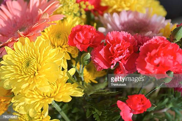 Close-up of carnations and mums in a bouquet of flowers.