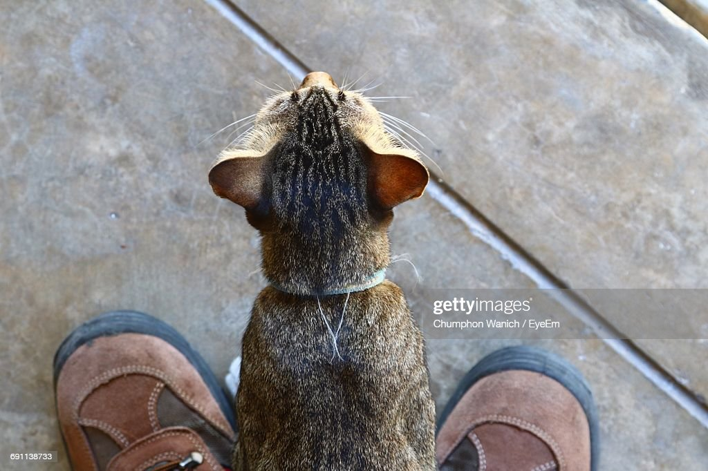 Close-Up Of Cat Amidst Shoes