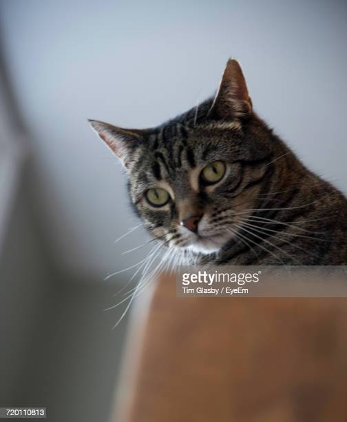 Close-Up Of Cat At Home