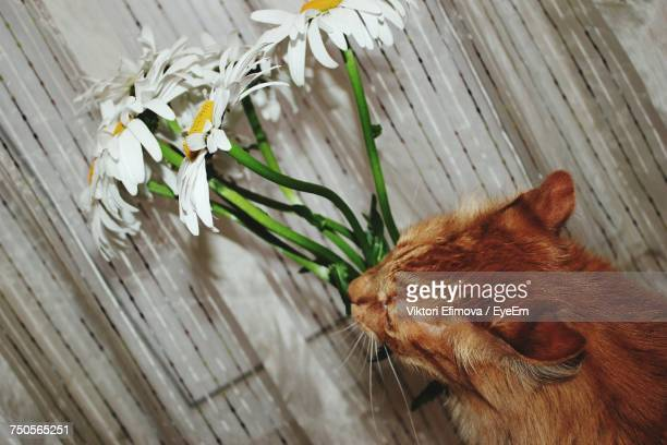 Close-Up Of Cat By Flowers