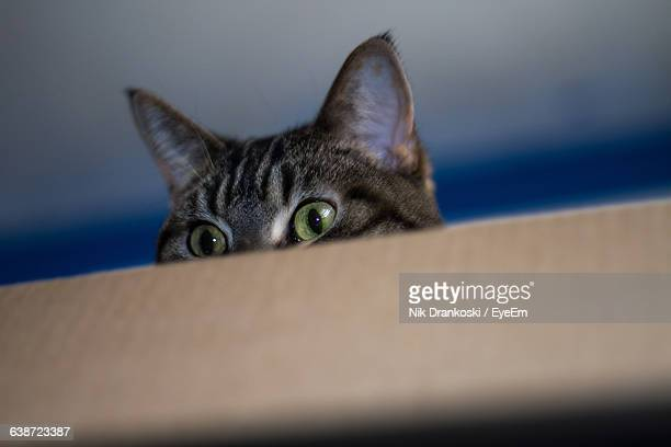 Close-Up Of Cat In Cardboard Box