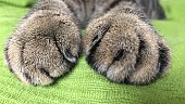Close-Up Of Cat Legs On Bed