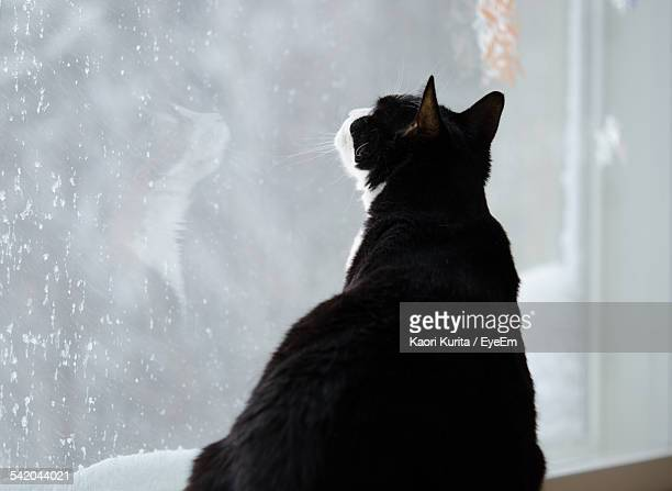 Close-Up Of Cat Looking Through Window At Home During Winter