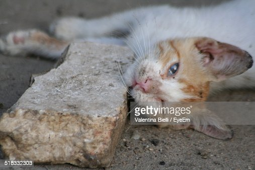 Close-up Of Cat Lying By Stone