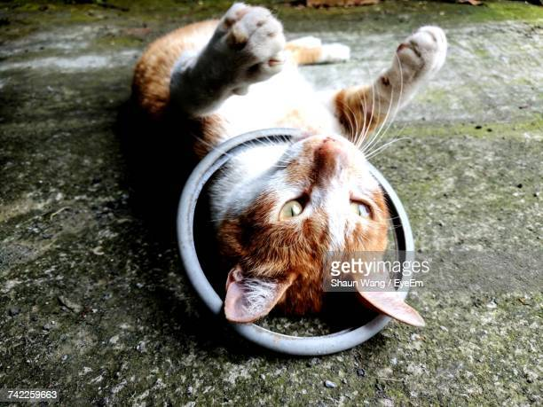 Close-Up Of Cat Lying On Footpath Outdoors