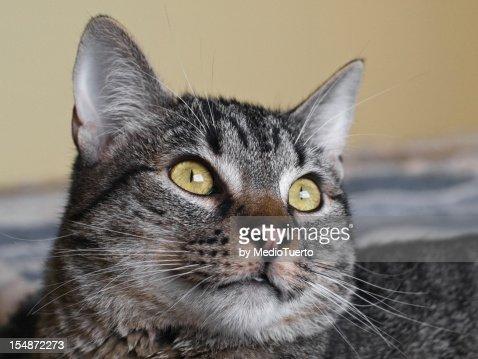 Close-up of cat. : Foto de stock