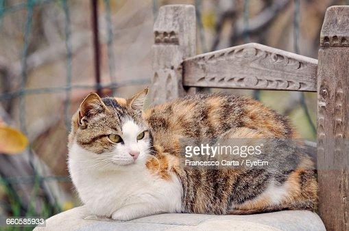 Close-Up Of Cat Relaxing On Chair