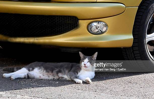 Close-Up Of Cat Resting On Street Below Gold Colored Car