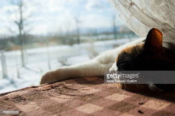 Close-Up Of Cat Resting On Window Sill