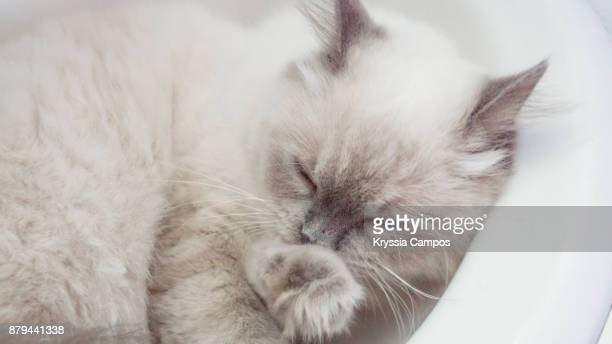 Close-Up Of Cat Sleeping In Sink At Home