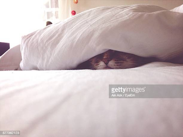 Close-Up Of Cat Sleeping On Bed Under Blanket